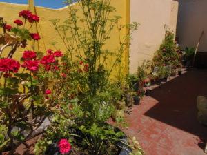 Terraza balcón Dto. P.A.
